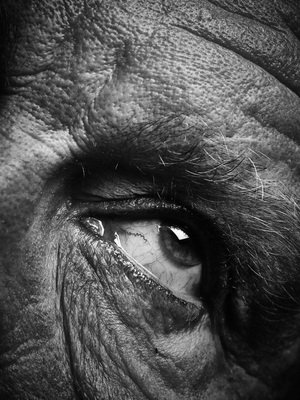 bill_brandt___eyes_date_2014_d_resize
