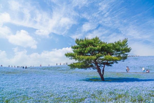 japan_u_plavom_resize