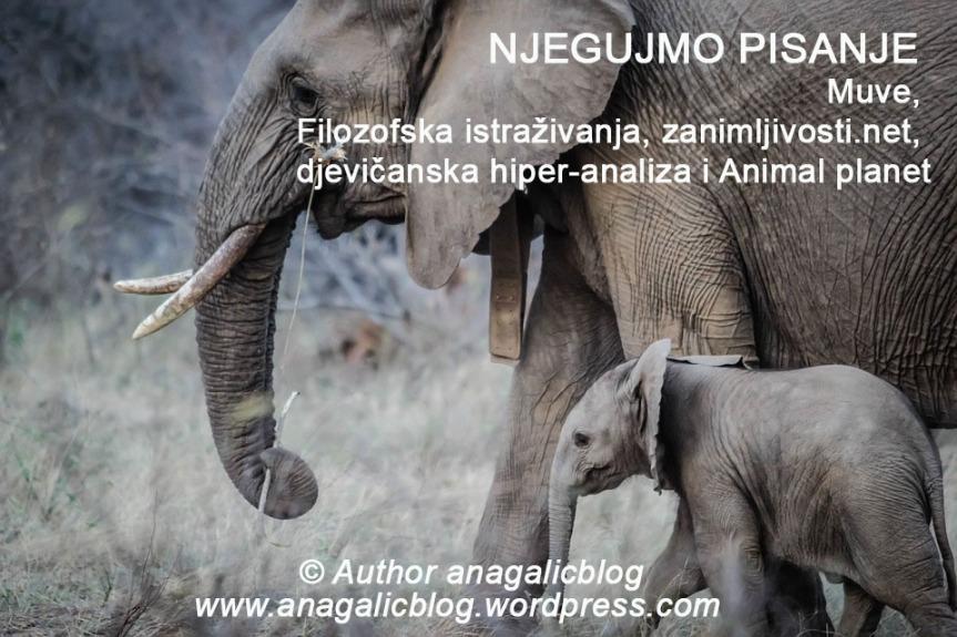 NJEGUJMO PISANJE: Muve, Filozofska istraživanja, zanimljivosti.net, djevičanska hiper-analiza i Animalplanet